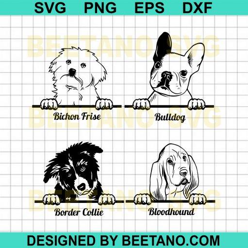 Bulldog Bichon Frise Border Collie Bloodhound Dog
